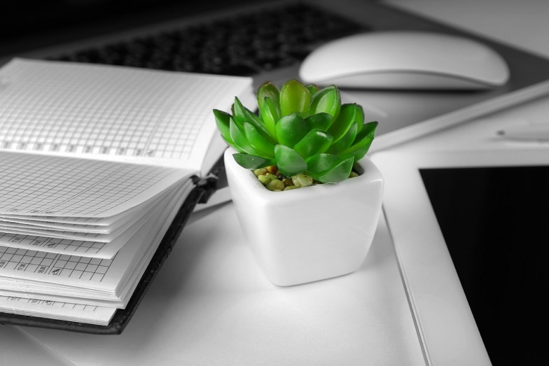 Succulent plant on desk with mouse and planner